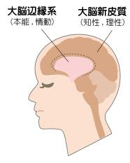 脳が司る目と口の領域